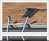 Roof repairs FAQs